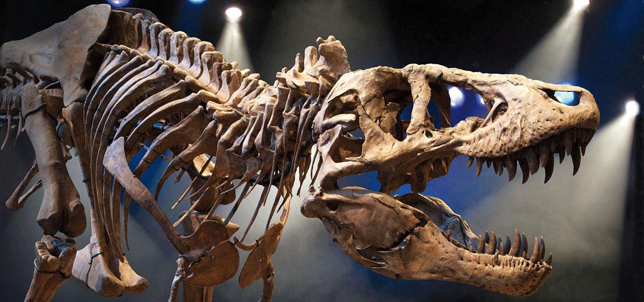"""Résultat de recherche d'images pour """"fossile dinosaure"""""""