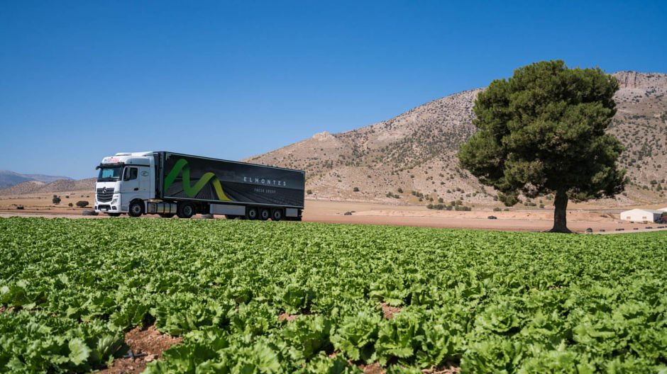 Low costs, rich harvest. An Actros from Miratrans leaving an El Montes farm in the northwest of Murcia province filled to the brim with green lettuces.