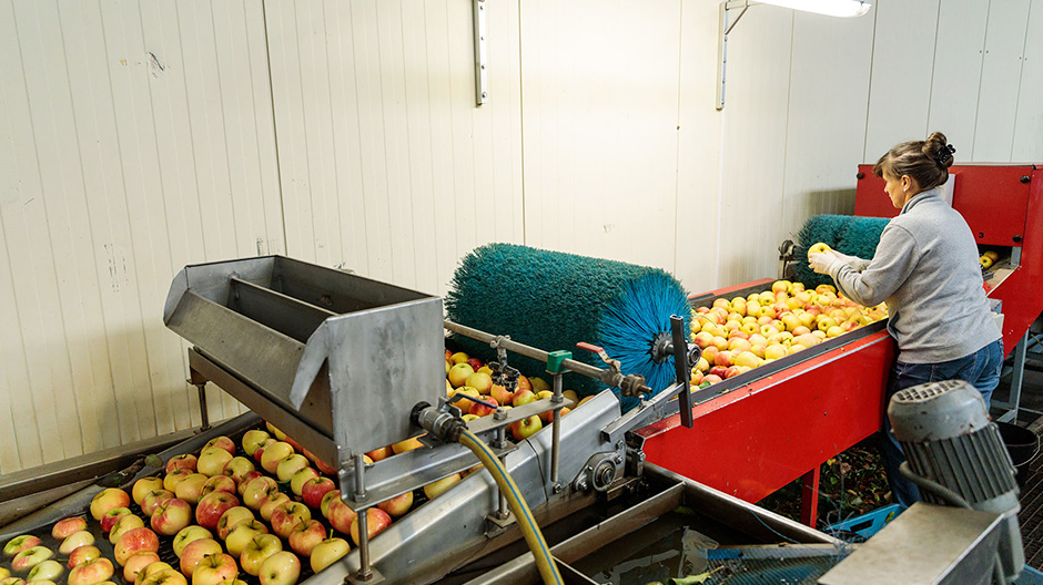 On the conveyor belt. Over an area of 40,000 square metres, 80 tonnes of apples move through the company's own plant facility on a daily basis.